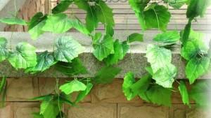 silk vines